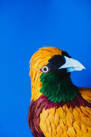 New Exotic Birds Diana Beltran Herrera