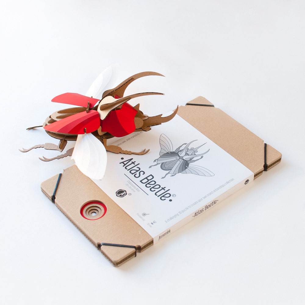 DIY Paper Beetle Sculpture Kits by Assembli - Atlas Kit