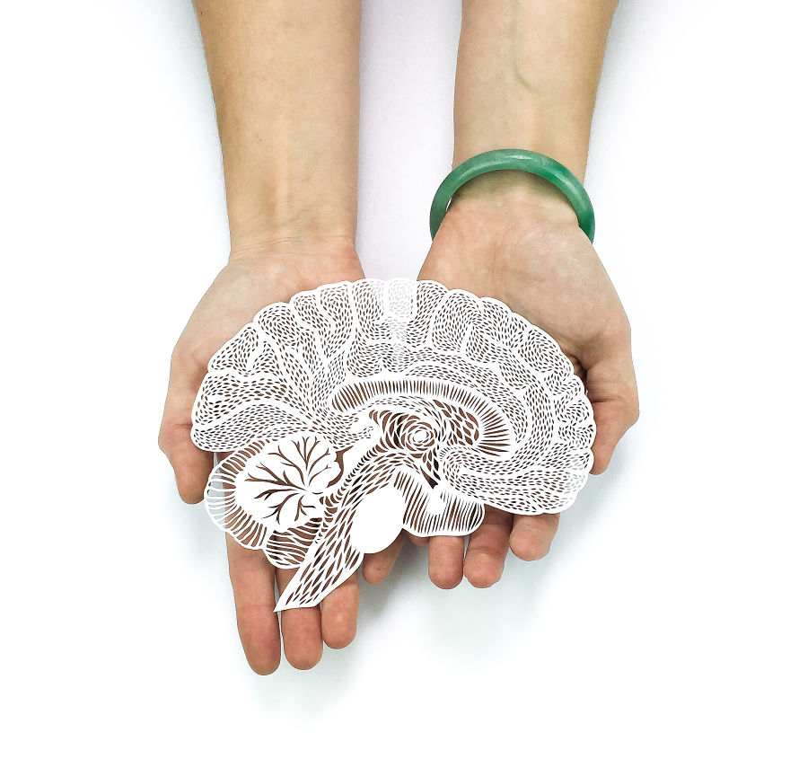 Intricately Detailed Hand-Cut Anatomical Organs Out Of Paper by Ali Harrison - Brain
